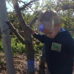 Field Trip to the Apple Orchard