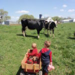 Cows on Pasture?? 60 Days Away?