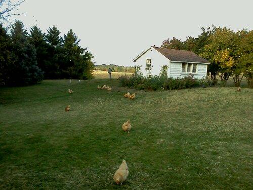 free ranging hens via zweberfarms.com