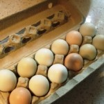 Egg Bake Recipe – A Christmas morning tradition