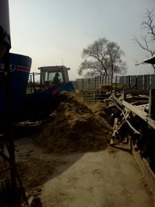 family farm, organic, minnesota, beef,