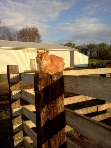 cute, cat, organic, farm, family, minnesota, mn