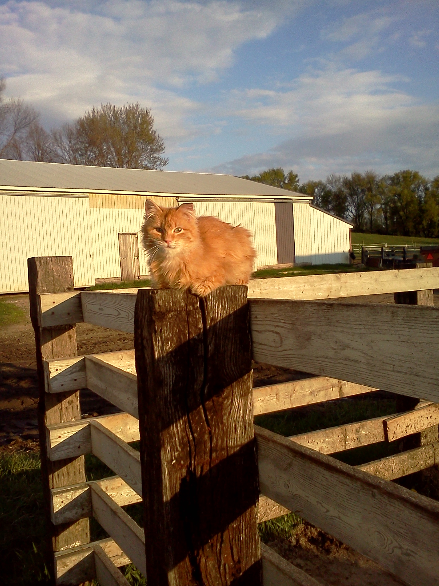 Cat on post