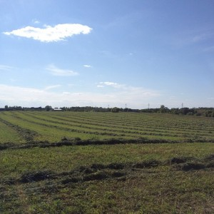 hay, alfalfa, organic, dairy, minnesota, family farm, minneapolis