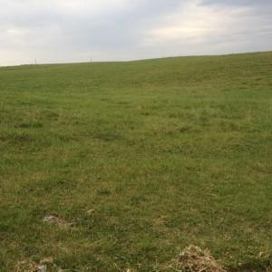 picture, farm, drought, dry, no rain, organic, hay, farmer, 2012