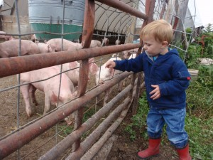 cute, family, farm, minnesota, organic, minneapolis