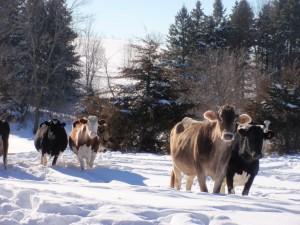 christmas on farm, 2010, minnesota