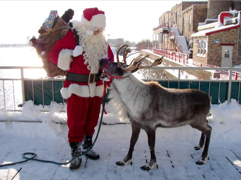 reindeer facts, picture