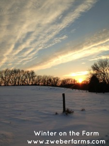 farm, what do farmers do in the winter, minnesota, mn, dairy, organic