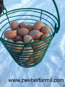 eggs for sale, mn, minnesota, family farm, organic, brown eggs, free range, food blog