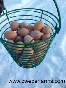 eggs for sale, mn, minnesota, family farm, organic, brown eggs, free range, food blog
