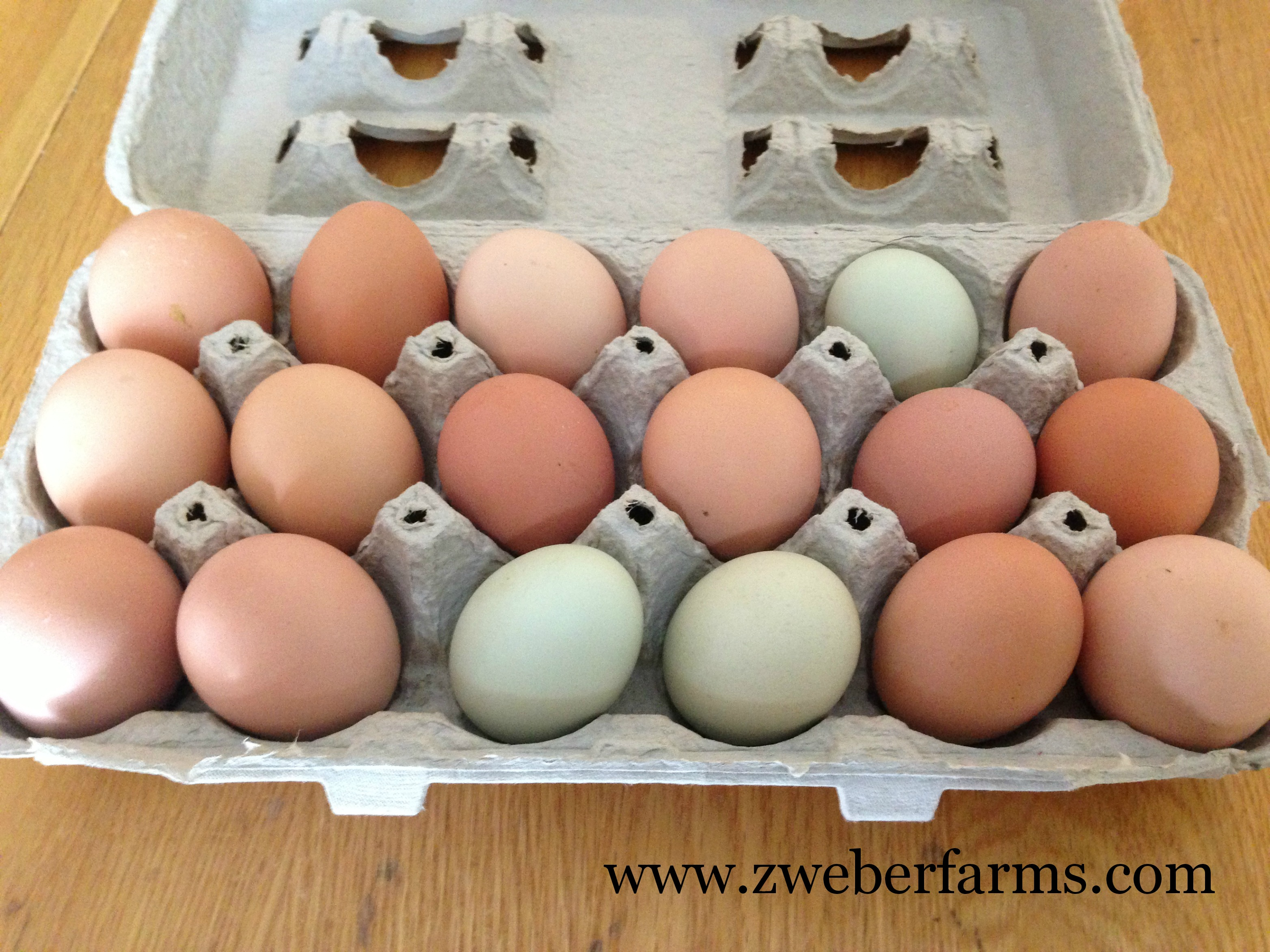 Free range eggs in carton
