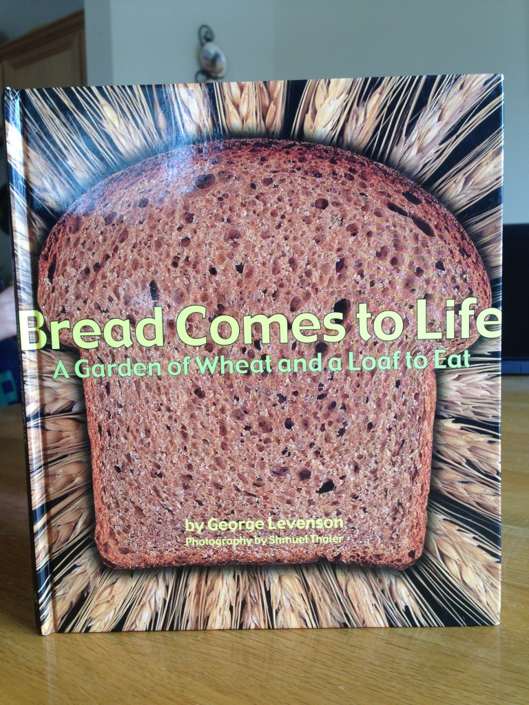 Bread come to life, wheat activities for preschool and kindergarten