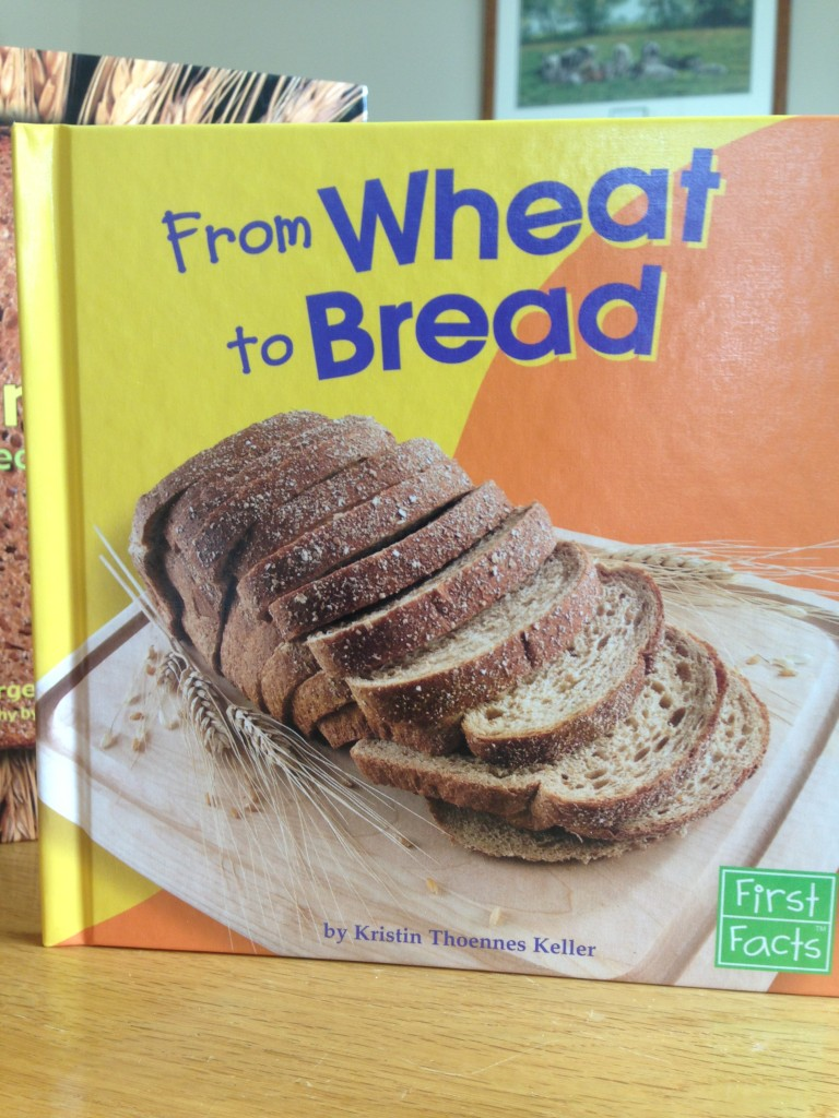 from wheat to bread, wheat activities for preschool and kindergarten