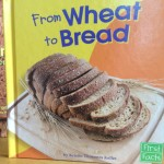 Wheat Activities for Preschool and Kindergarten