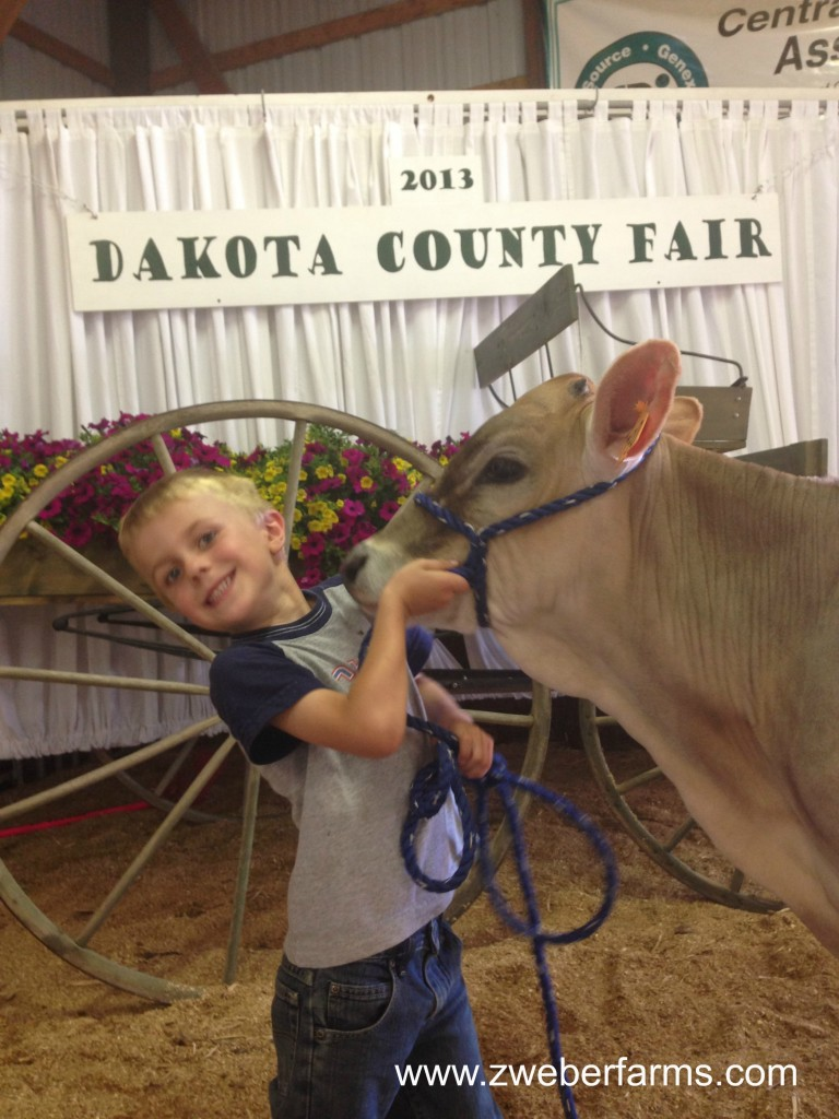 Dakota County Fair 2013 via zweberfarms.com