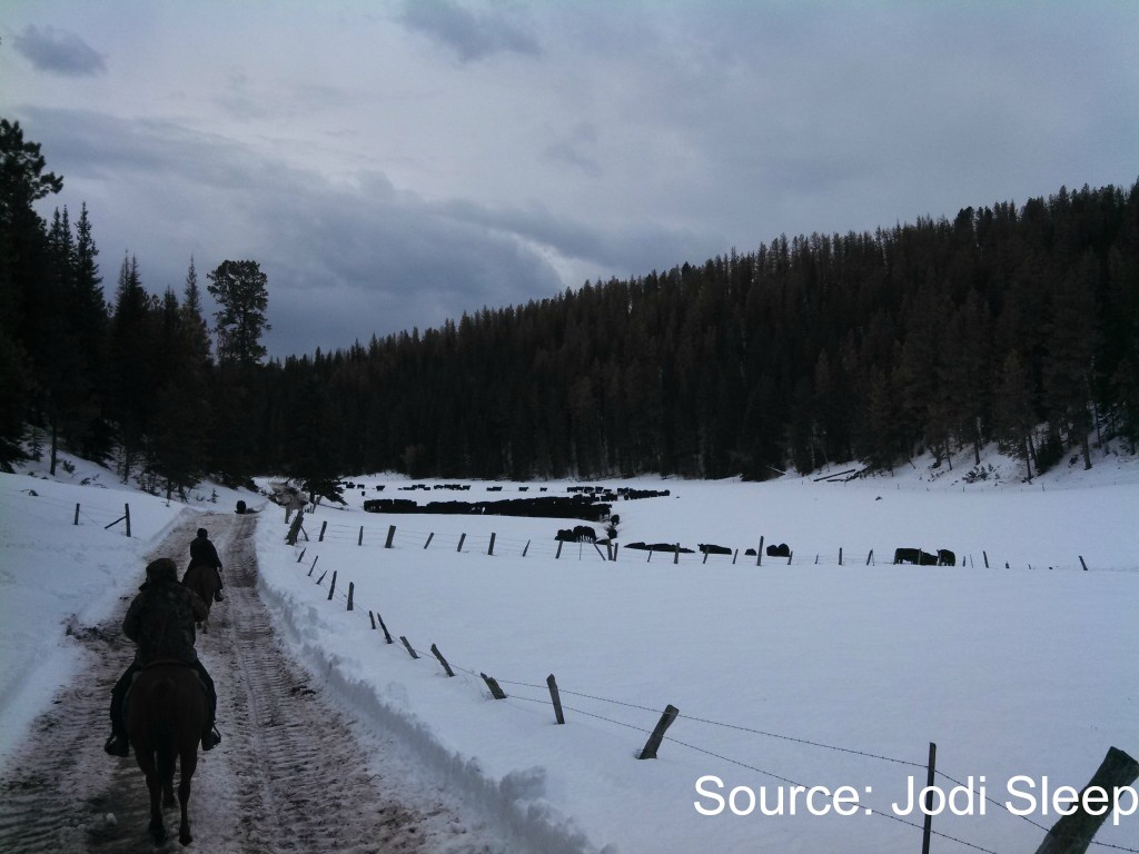 Ranchers finding cows on horseback via Jodi Sleep. Support Ranchers http://bit.ly/GPkRRh