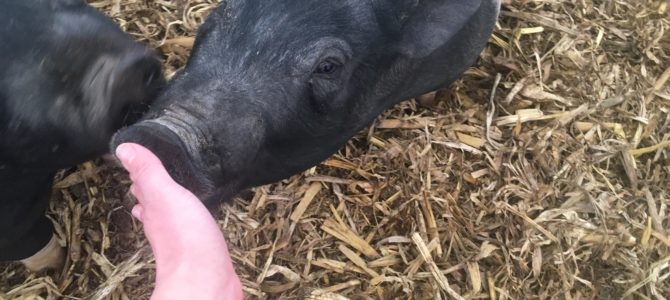 Zweber Farm Vlogs!