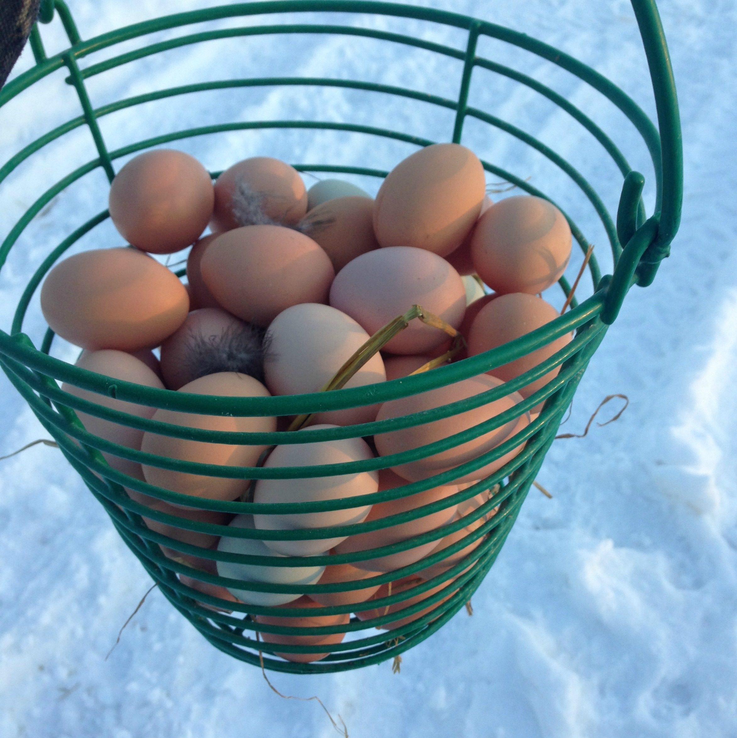 eggs for sale,free range, new frontier farm, mn, minnesota, family farm, organic, brown eggs, free range, food blog